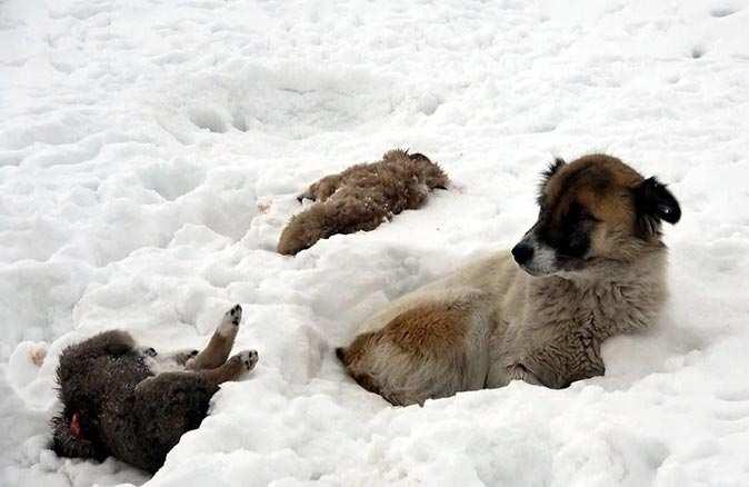 Yavru köpekler donarak telef oldu