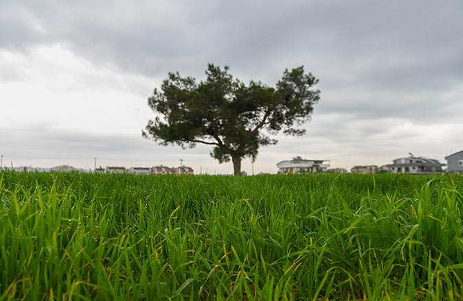 Muratpaşa'nın buğdayda hedefi: Dünya ortalamasının üzerinde hasat