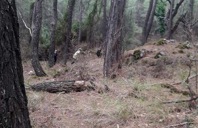 Ağaçları kökünden söküp arazi alanı oluşturmaya çalıştılar