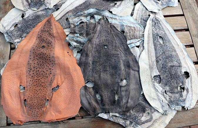 Balon balığı derisi yeni bir istihdam alanı olmayı bekliyor