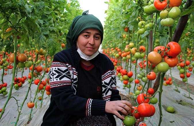 Domates fiyatında düşüş, meyvede ise rekor artış yaşanıyor