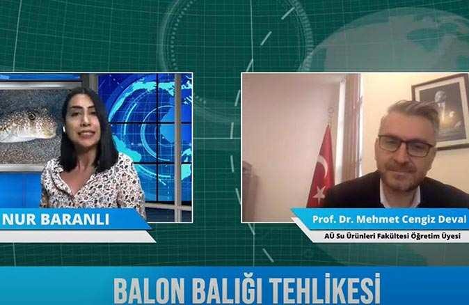 Balon balığı ölümlerine karşı  Prof. Dr. Mehmet Cengiz Deval uyardı! Zehri siyanürden bin 200 kat daha fazla etkili