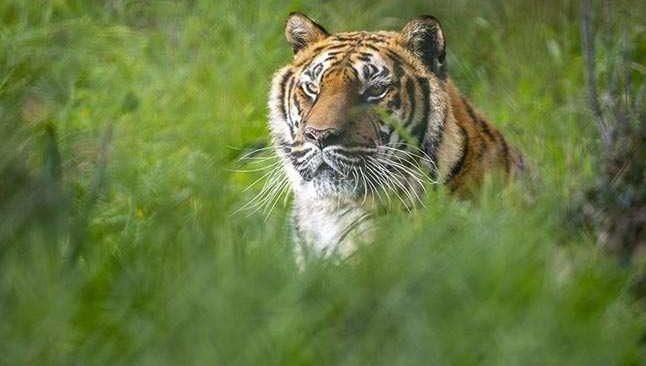 Antalya Hayvanat Bahçesi turizm sezonuna hazır