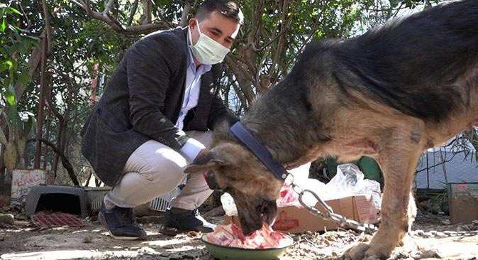 Cezaevine giren kişi bir dilekçeyle hayvanlarını ölümden kurtardı