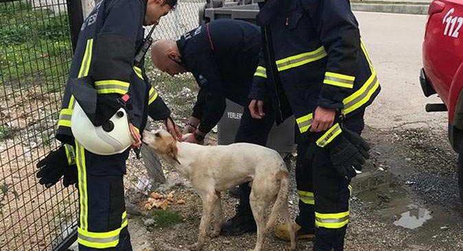 Su kuyusuna düşen sokak köpeği itfaiye ekipleri tarafından kurtarıdı