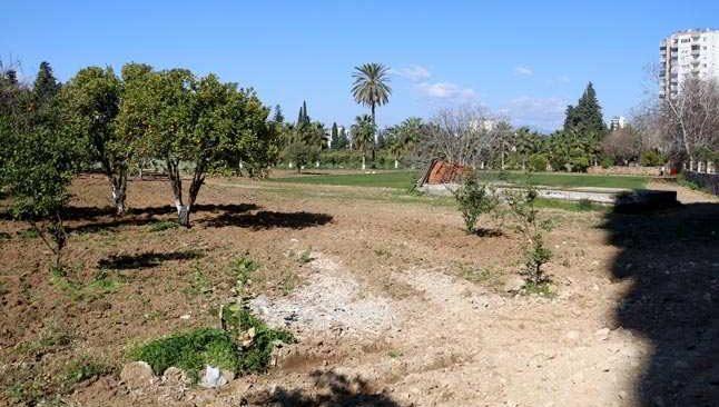 Narenciye bahçesindeki ağaçları kesen firma için harekete geçildi
