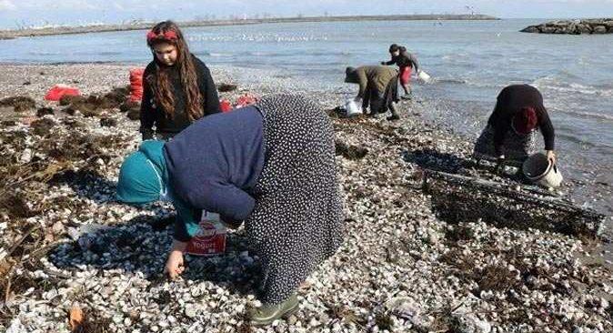 Samsun'da salyangozları satıp para kazanıyorlar