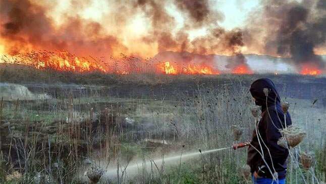 Sazlık alanda başlayan yangın rüzgarın etkisiyle büyüdü