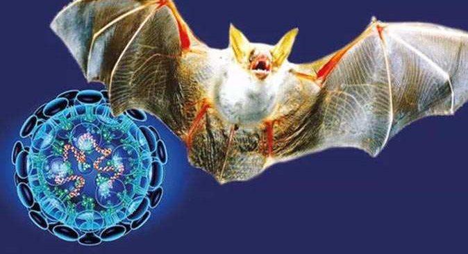 Endişelendiren haber: Koronavirüse benzeyen yeni bir virüs keşfedildi