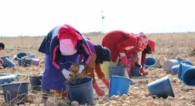 Çiftçiye verilen gübre destekleri iki katına çıkarıldı