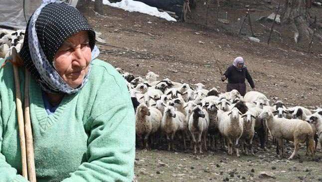 Fatma teyzenin 62 yıllık çobanlık hikayesi