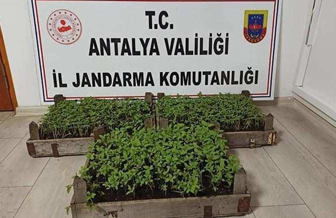 Antalya'da ihbarı alan ekipler harekete geçti! Bin 569 adet ele geçirildi
