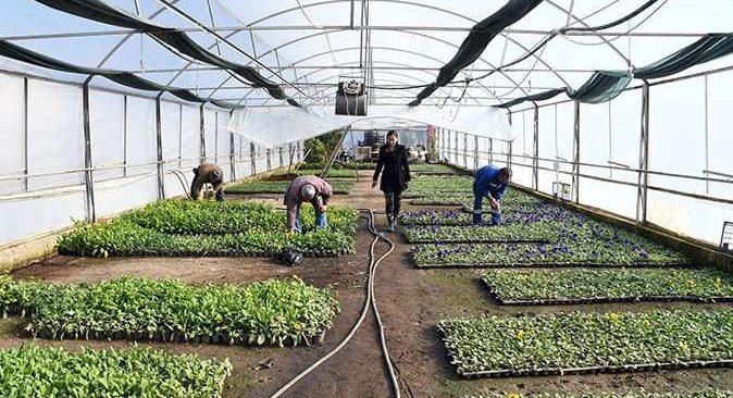 Kemer Belediyesi çeşitli bitki türlerini kendi üretiyor