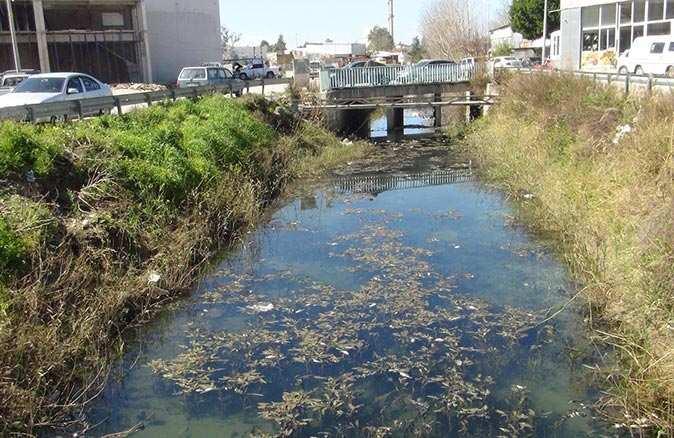 Manavgat Sanayisi'nde yüzlerce balık telef oldu