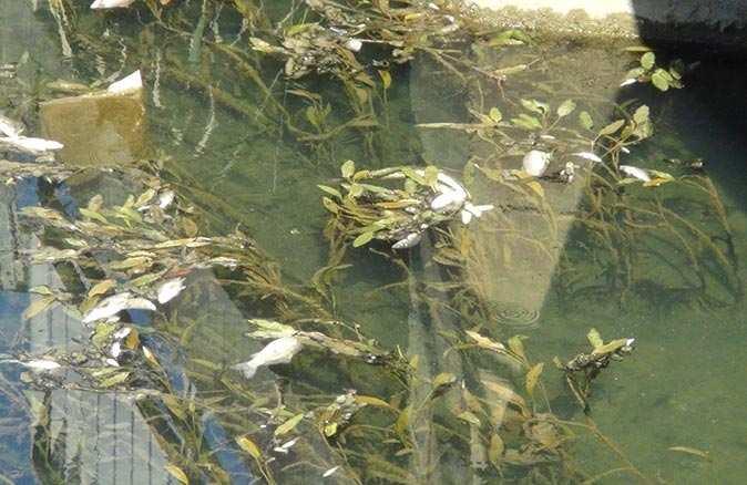 Manavgat Sanayisi Sitesi'nde yüzlerce balık telef oldu