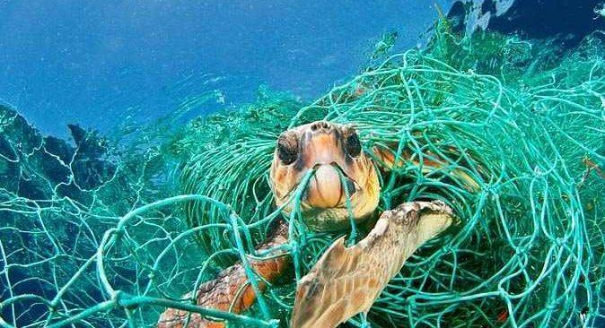 WWF'den Akdeniz için kritik uyarı: '2030'a kadar Akdeniz'in en az üçte biri korunmalı'