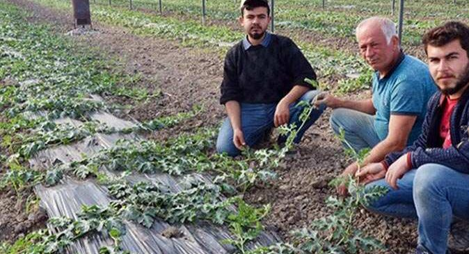 Antalya'da karpuz üreticileri yeni dikimleri yaptı