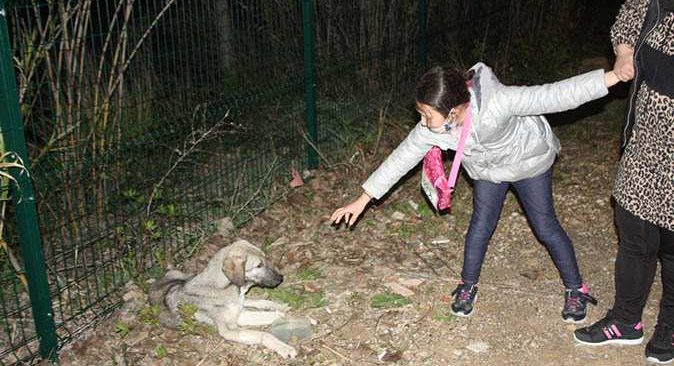 Küçük kızın hasta köpeğin başındaki ağlayışları yürekleri burktu