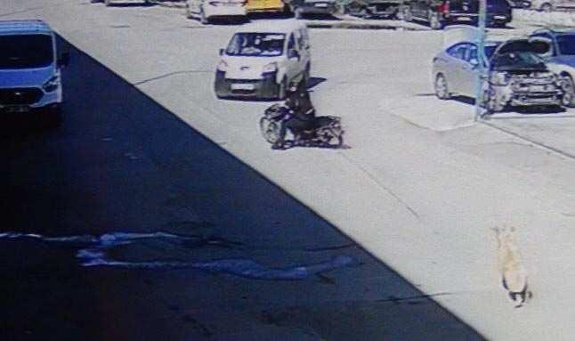Köpekten korkan motosikletli kaza yaptı