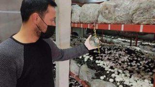 Genç girişimcinin ürettiği mantarlar kapış kapış satılıyor