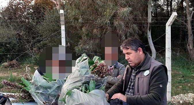 Antalya'da izinsiz orkide toplayan şahıslara 160 bin lira ceza!