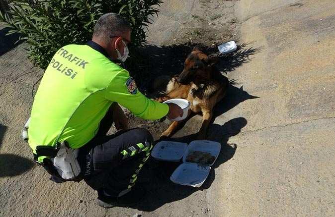 Acılı kurt köpeğini polis sakinleştirdi