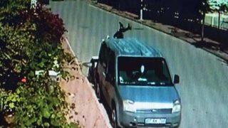 Genç sürücü araca çarpıp camından içeri girdi