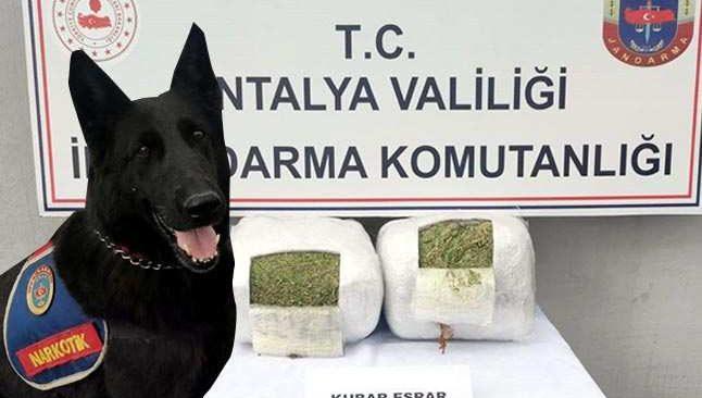 Antalya'da dedektör köpek 11 kilo esrar buldu
