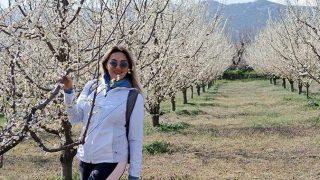 Meyve bahçelerinin çiçeklenme yürüyüşüne büyük ilgi