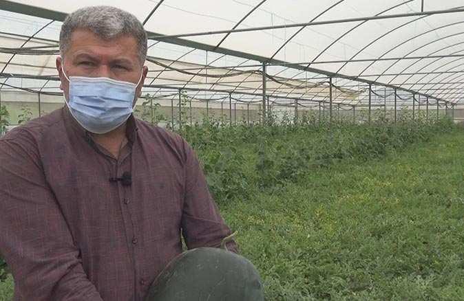 Erkenci karpuz Antalya'da üreticisinin yüzünü güldürdü