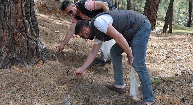 Kuzugöbeği mantarının kilosu 150- 350 liradan alıcı buluyor