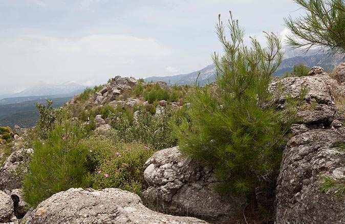 Antalya'da küle dönen ormanlar yeşillendi