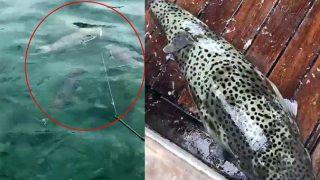 İstilacı ve zehirli bir tür olan balon balığı Lara sahilini sardı