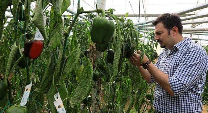 Antalya'da sebze ve meyveleri böcekler koruyor