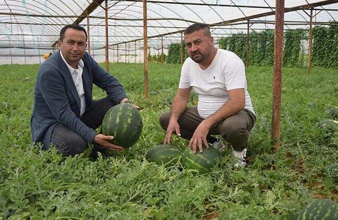 Antalya'da karpuz üreticisinin yüzü gülüyor