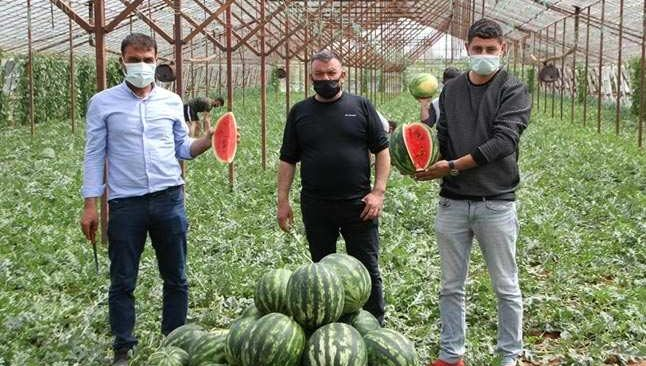 Antalya'da seralarda üretilen yılın ilk karpuzlarının hasadına başlandı