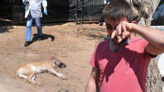 Kaybettiği iki çocuğunun yerine koyduğu köpekleri vurulan adam gözyaşlarını tutamadı
