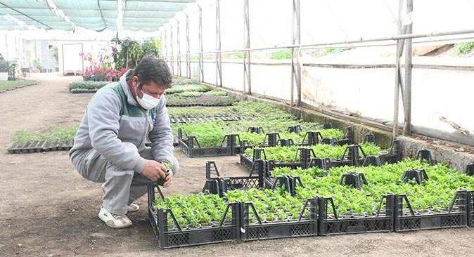 Kemer Belediyesi yerli tohum üretmeye başladı