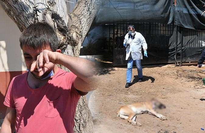 Çocukları gibi sevdiği köpekleri vurulan adam perişan oldu