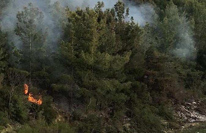 Temizlik sonrası yakılan ateş ormanı yaktı