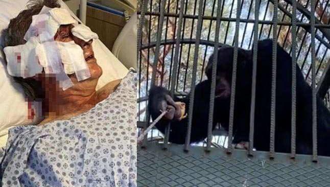 Antalya'da kafesten kaçan maymun otel çalışanına saldırdı