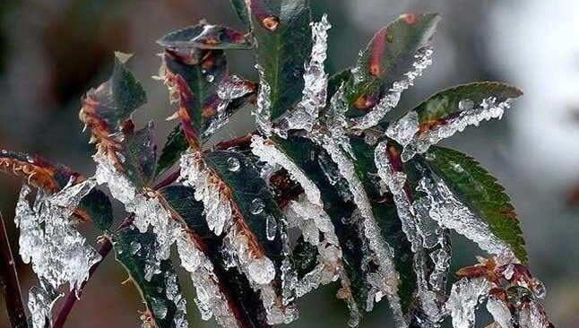 10 Nisan Cumartesi Antalya'da hava durumu... Meteorolojiden zirai don uyarısı