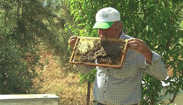 Antalyalı arıcının arılarla sıra dışı dostluğu