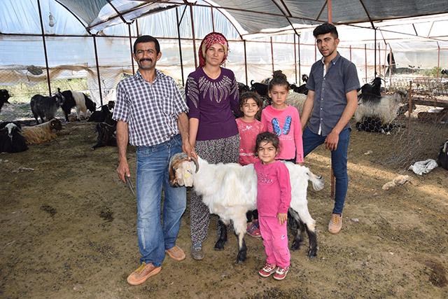 Antalya'da çobanlar göç etmeye hazırlanıyor
