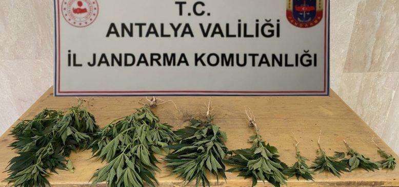 Antalya'da Hint Keneviri baskını