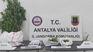 Antalya haber... Jandarmadan kenevir operasyonu
