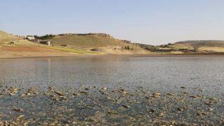 Mardin'deki toplu balık ölümleri yürekleri sızlattı