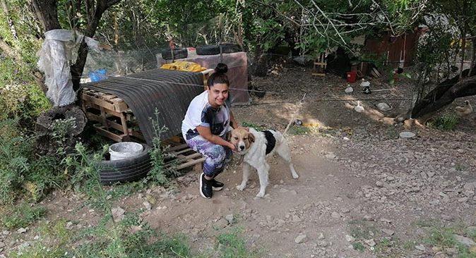 Mahalle sakinleri ölüme terk edilen köpeklere sahip çıktı