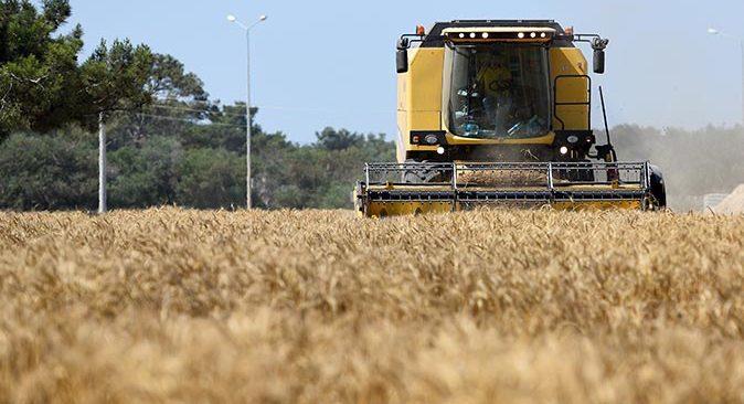 Muratpaşa Belediyesi 45 dönümde buğday hasadı yaptı