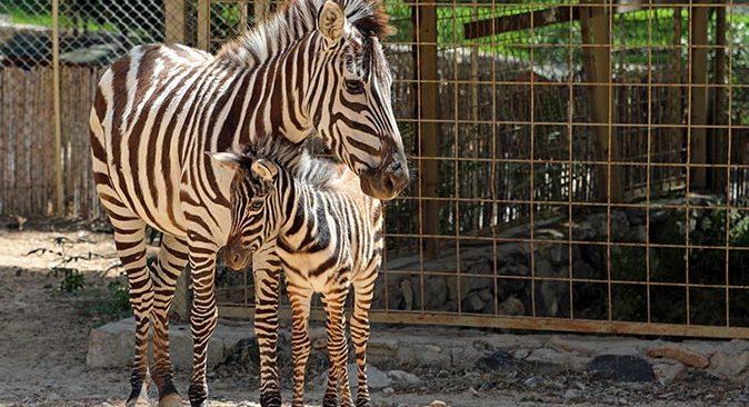 Antalya Hayvanat Bahçesi'nde 150'nin üzerinde yavru dünyaya geldi